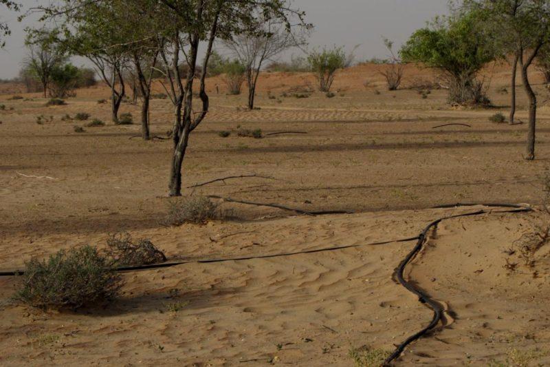 Irrigación en el Al Maha Resort, Dubai