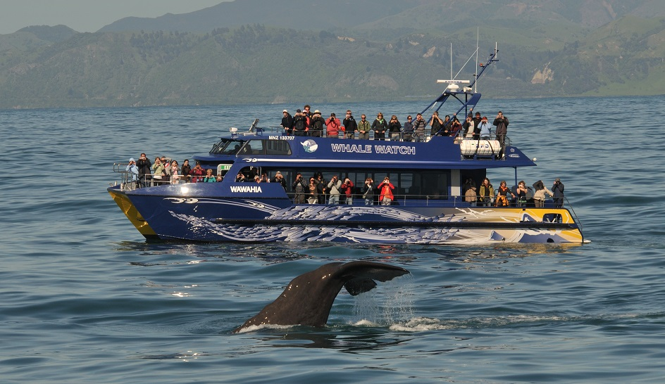 Whale watch kaikoura limited essay