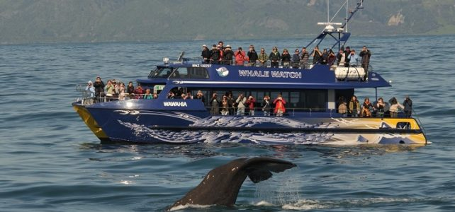 How New Zealand Ecotourism Operator Whale Watch Kaikoura Manages Sustainability