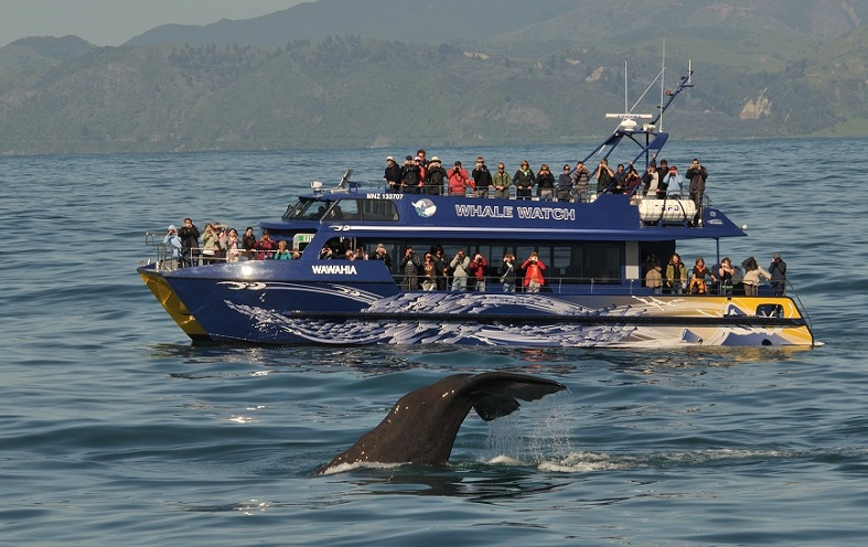 Sustainable tourism example Whale Watch Kaikoura, New Zealand