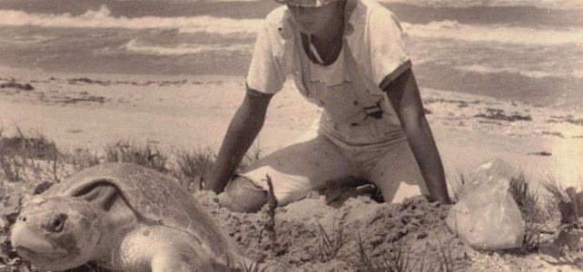 Ariane Janer of Bromelia consulting helping sea turtles