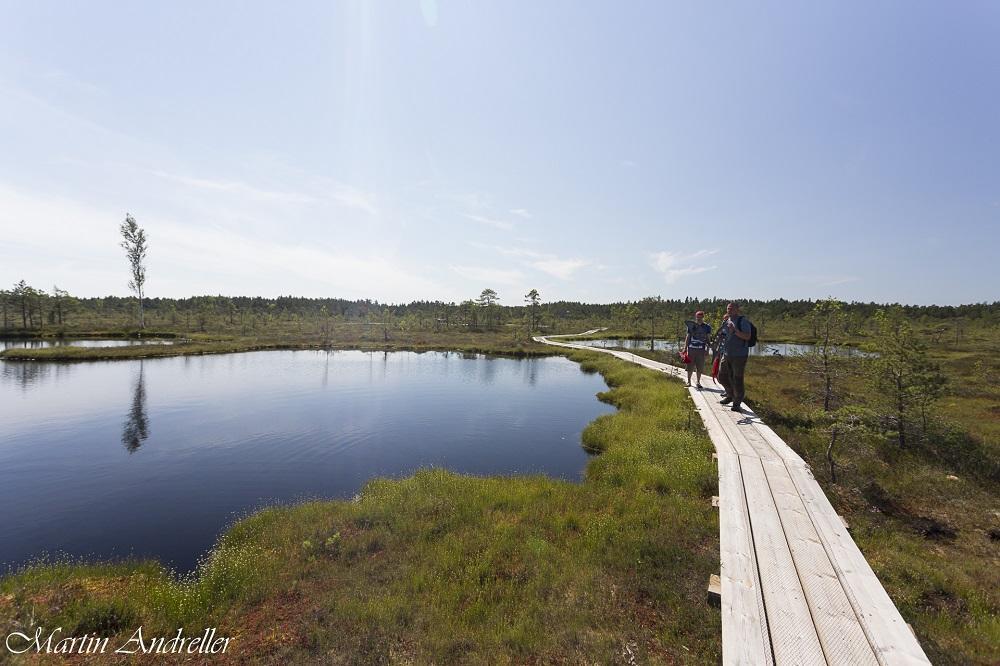 Bog Trail of Soomaa national park